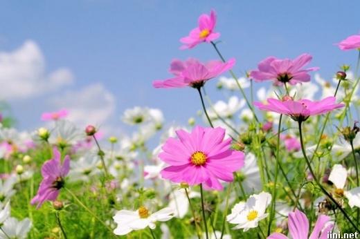 ảnh hoa cỏ mùa xuân đẹp phơi phới