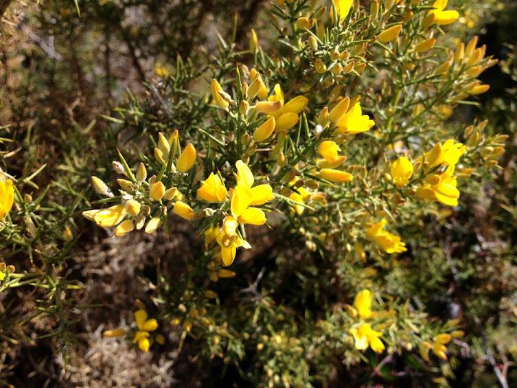Flores en Sierra de Aitana
