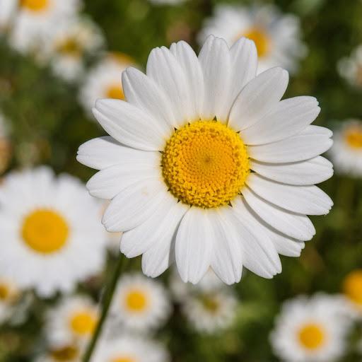 Daisy Burgos (Daisy-s Reviews