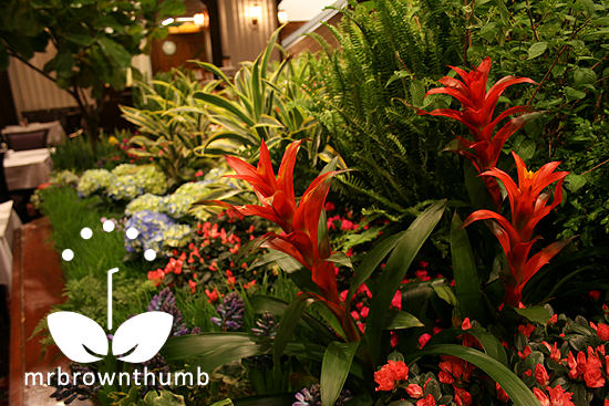 Orange Bromeliad, Red Bromeliad, Macy's Flower Show