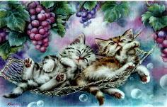 cat3 (2).jpg