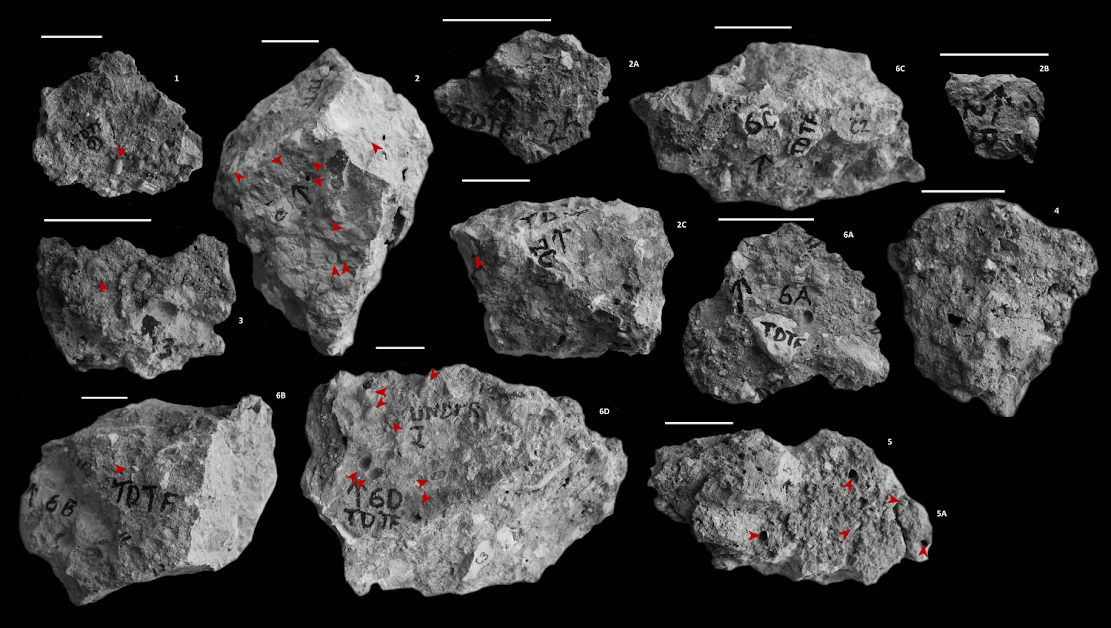 Palaeontology: Fossil bee nests provide clues about the environment in which Australopithecus africanus lived