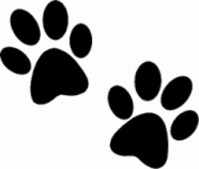 Afbeeldingsresultaat voor hondenpoot