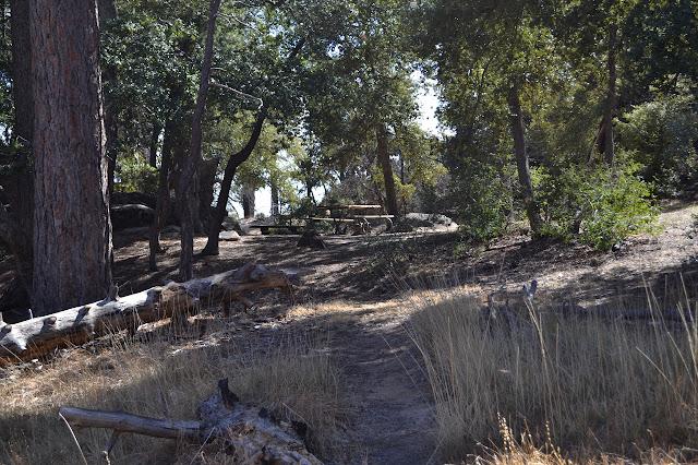 Mission Pine Spring Camp
