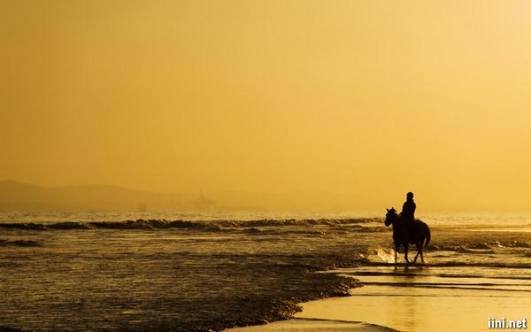 ảnh cưỡi ngựa dạo quanh biển một mình