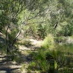 Campsite at Lake Eckersley