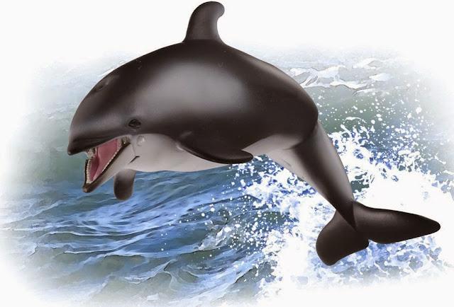 Sản phẩm Mô hình Cá Heo Ania AS-19 Pacific white-sided dolphin có thể dùng để bày hoặc đồ chơi