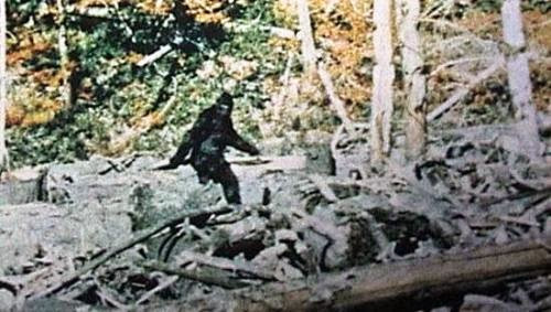 Bigfoot An Alien Mufon Ufo Conference Mulls Possibilities