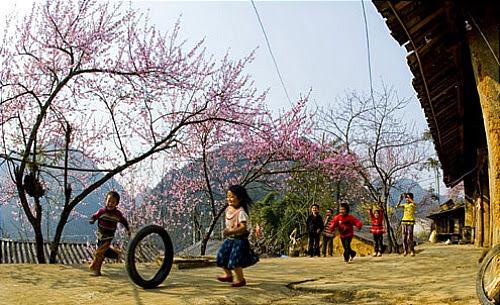 mua hoa dao no o ha giang1 Mùa hoa đào nở ở Hà Giang