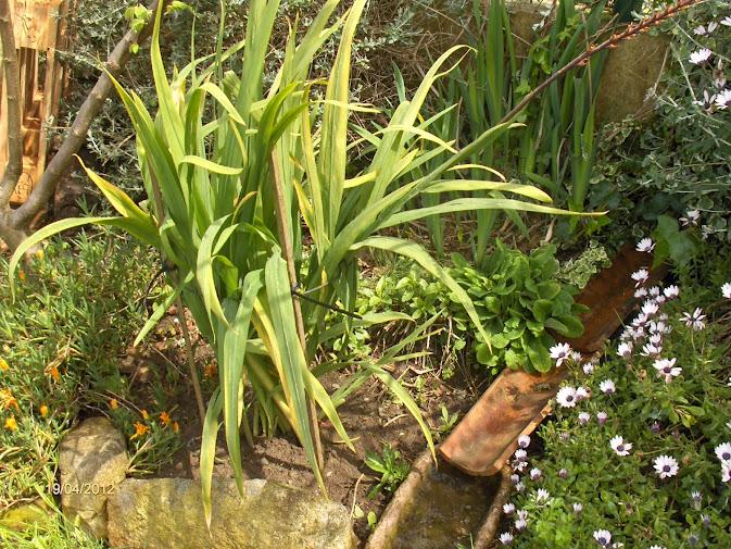 Aprendiz soporte para varas florales altas reciclando - Plantas para jardineras al sol ...