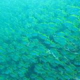2013-01-20 Diving in Sydney