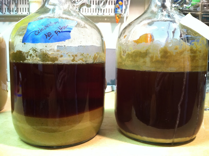 one-gallon carboys — with and without trub