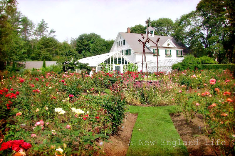 A New England Life: Fuller Gardens, North Hampton, NH