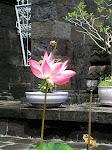 Banyuatis: temple Bouddhiste de Brahma Vihara Amara