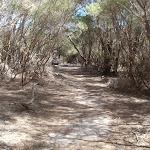 Track through the heath to Scotts Hut picnic area (105310)