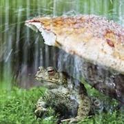 К чему снится огромная жаба?