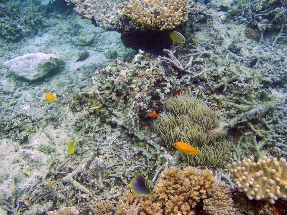 Coral Reef, Naigani Island, Fiji