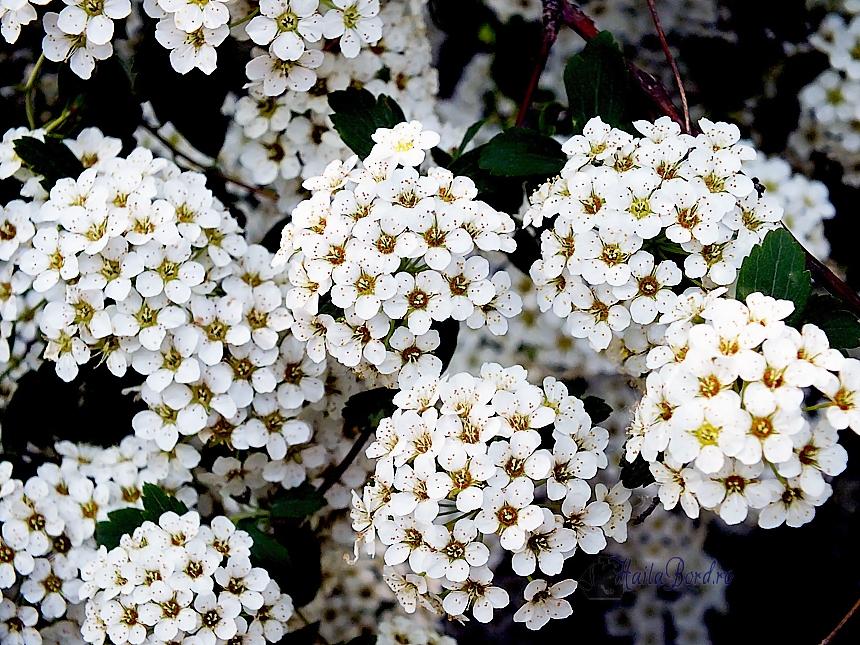 flori albe gradina botanica bucuresti