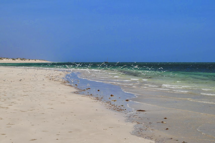 Остров Невозвращения (озёра: Найваши, Баринго, Богория, Туркана, о-ва: Южный, Ламу, Киваю)