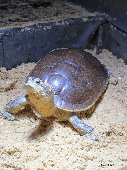 mes tortues (BK) - Page 12 IMG_4493