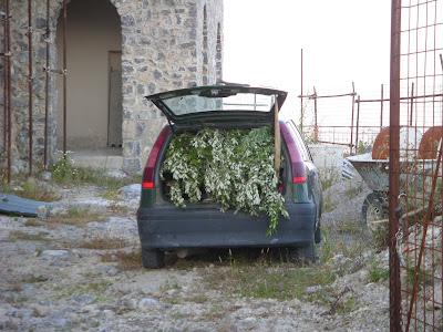 車のトランクに木の枝が満載