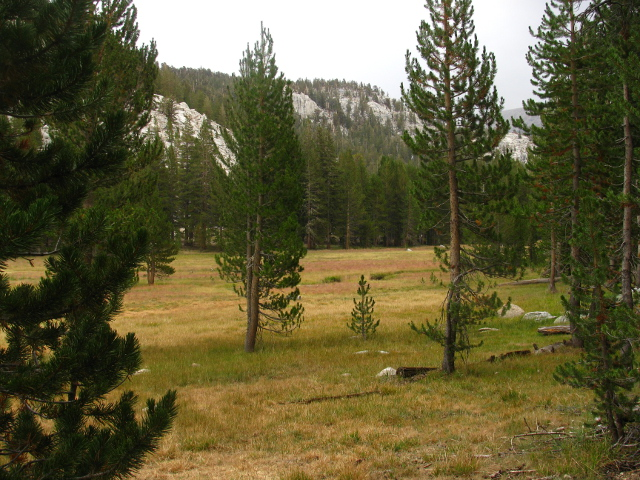 meadow above the Rock Creek Ranger Station