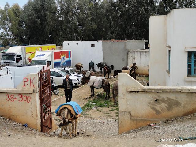 Marrocos 2012 - O regresso! - Página 9 DSC07854