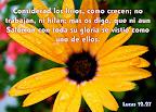 Lucas 12.27