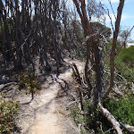 Track behind North Tura Beach (106315)