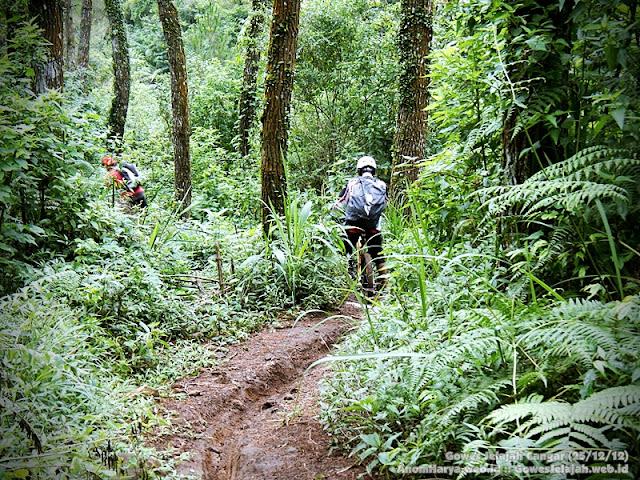 Masuk jalur di hutan Cangar