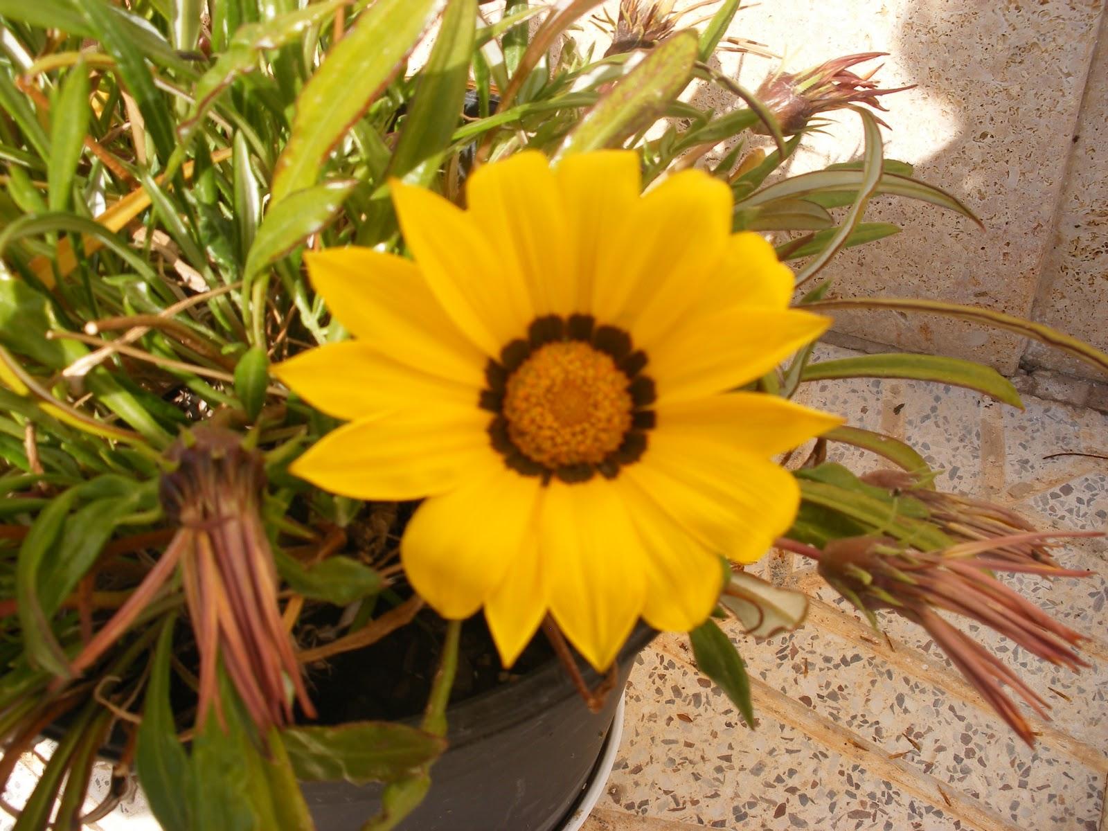 El huerto de ram n flores de plantas ornamentales for Plantas ornamentales