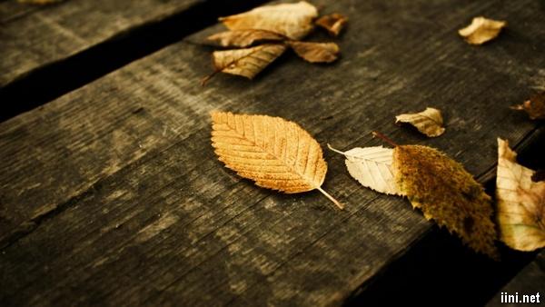 gió heo may làm lá rơi rụng