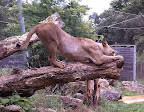 Löwengymnastik