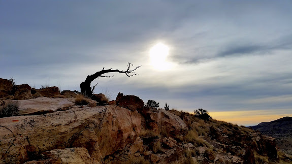 Dead juniper and hazy sky