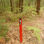 track marker near Pines picnic area (320843)