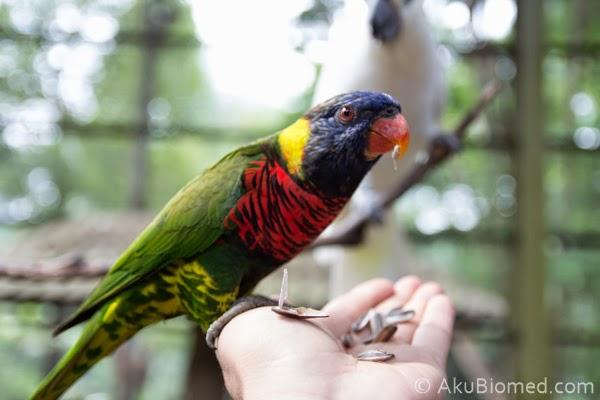 burung nuri makan kuaci
