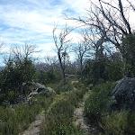 Rennix walk high on the ridge (270203)