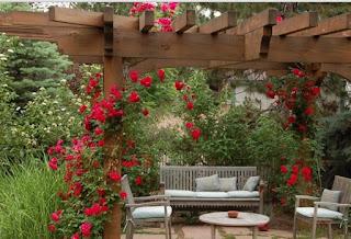 Dàn pergola gỗ nổi bậc với các loại hoa hồng leo đỏ thắm