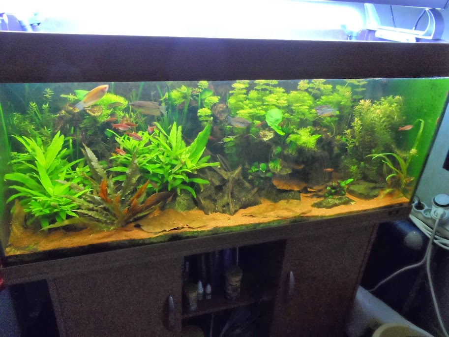 Ma petit fishroom SAM_1795