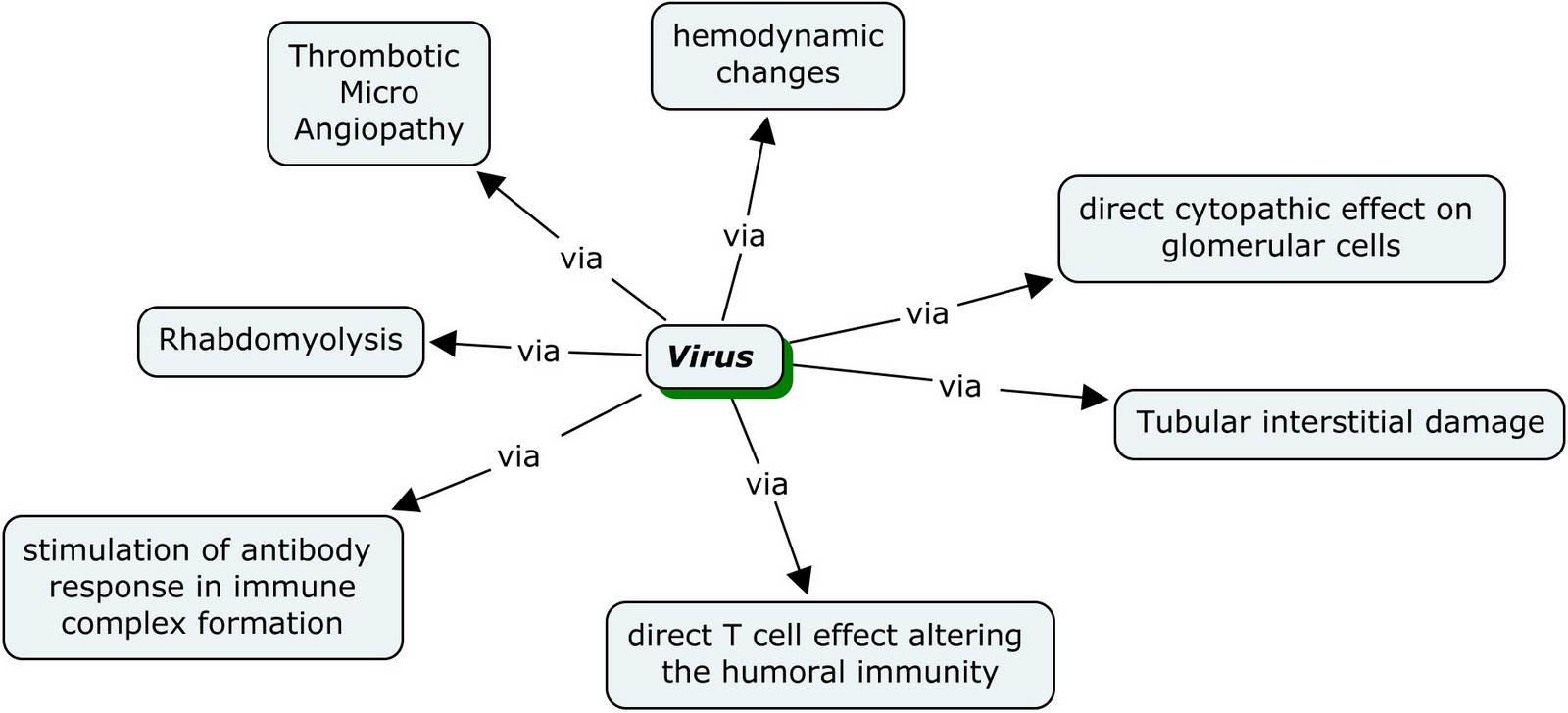 Immunity Concept Map.Nephron Power Concept Map Of Viruses And The Kidney A General