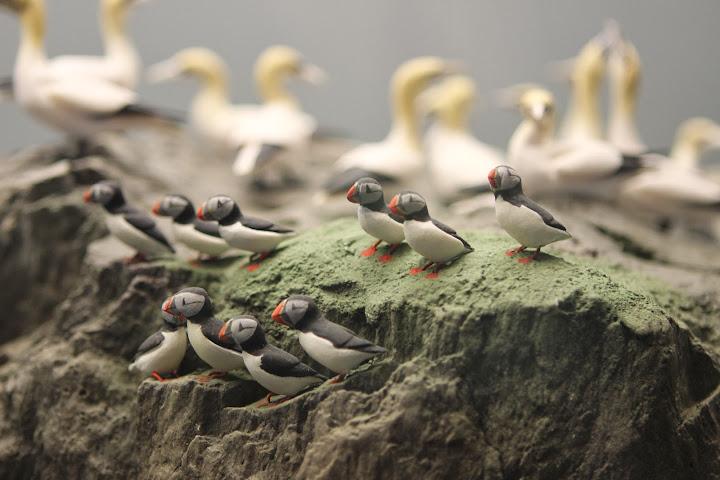 Auch sehr schön ist dieses Modell mit Seevögeln