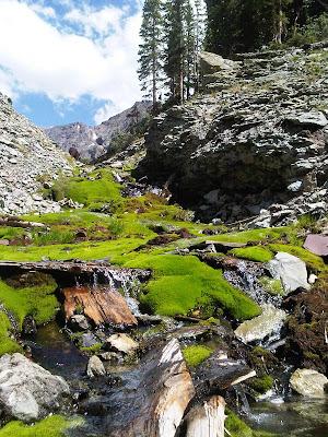 tb creek