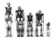 σκελετοί ανθρώπου,σκελετός πιθήκου, human skeleton,apes skeleton