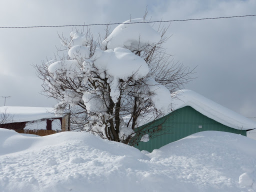樹木も雪で