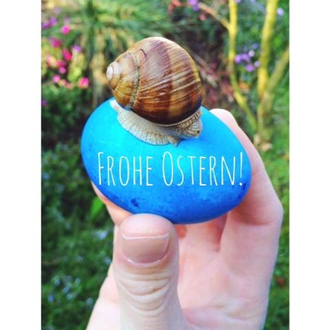Ostern, frohe Ostern, Weinbergschnecke, Ostereier, Osterei