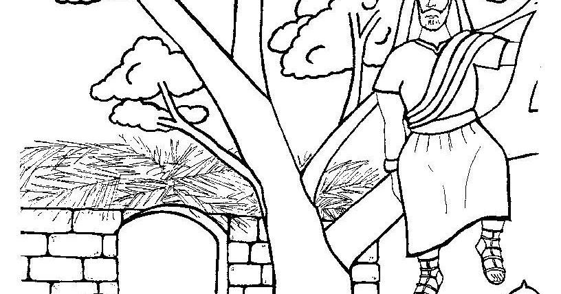 zacchaeus coloring page - Clip Art Library | 428x816
