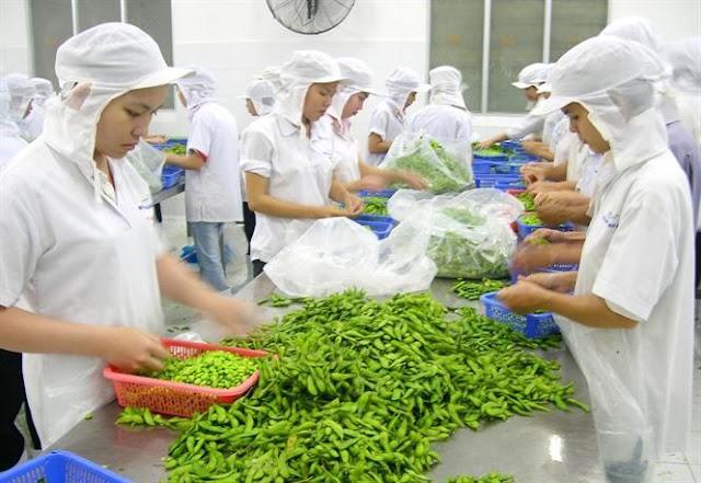 Đơn hàng chế biến thực phẩm cần 6 nam và 9 nữ làm việc tại Tochigi Nhật Bản tháng 12/2017