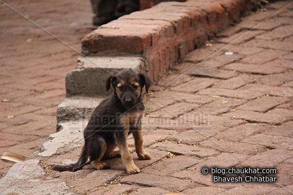 Cute Street Puppies -Giving an innocent look