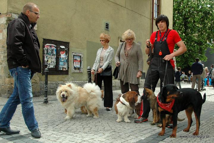 różne rasy psów z rottwielerem