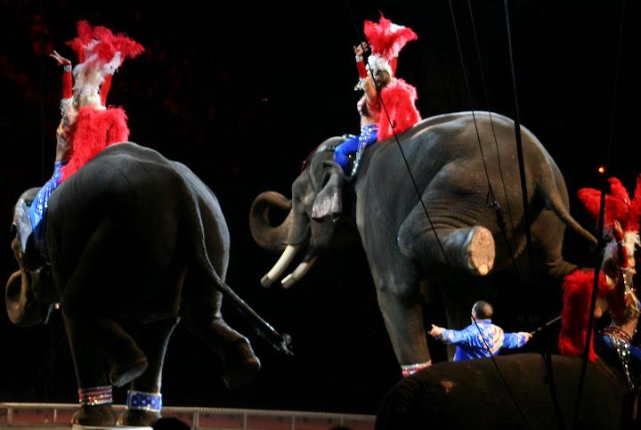 Elephants can do a handstand better than I.